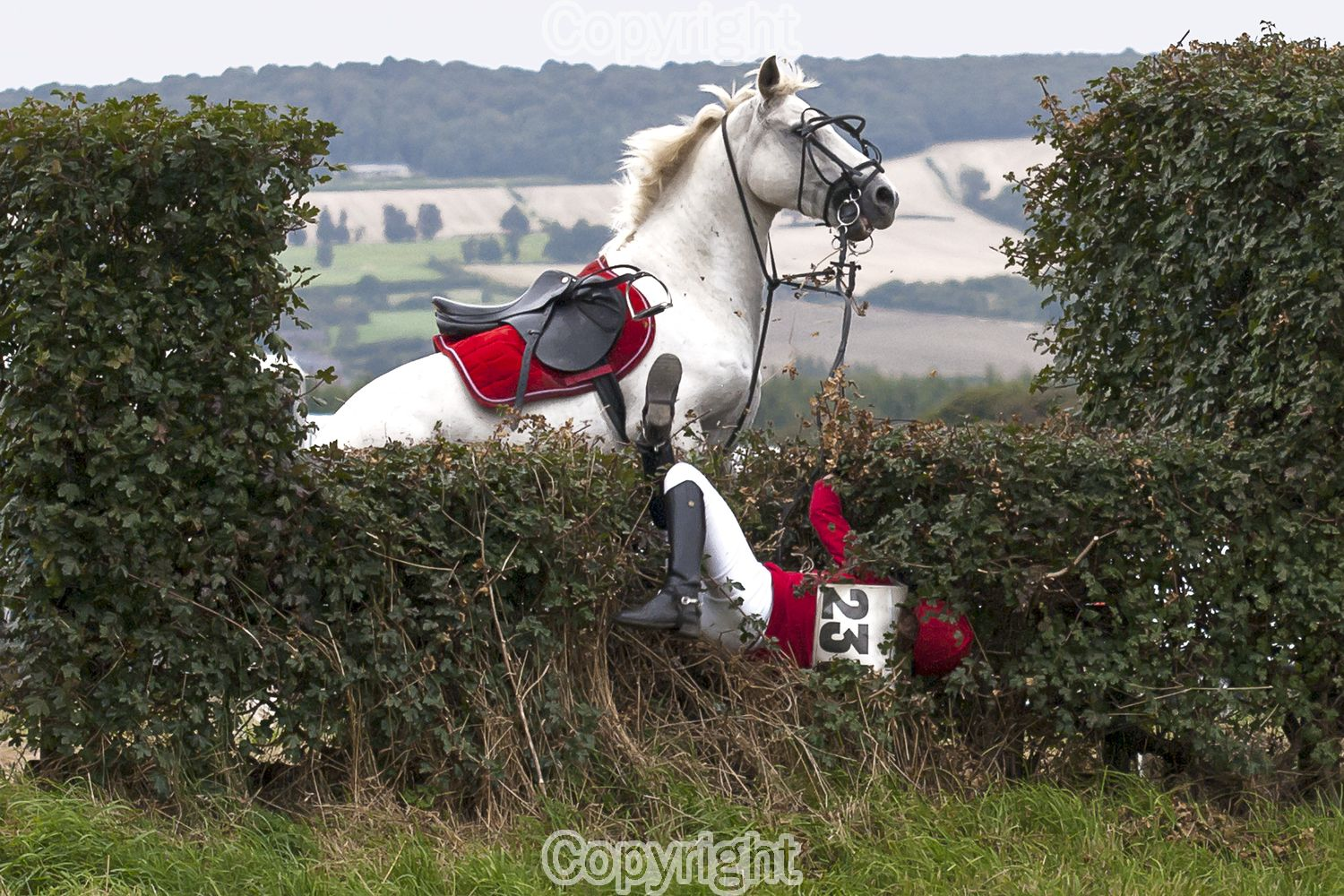 This picture was taken at a Hunter Trial and enabled me to enjoy my 2 hobbies Photography and The Horse. After walking the course I decided that this fence would prove the most challenging to both horse and rider, I positioned myself as near to straight on as I could and it wasn't too long before this happened. Horse and rider were fine afterwards.