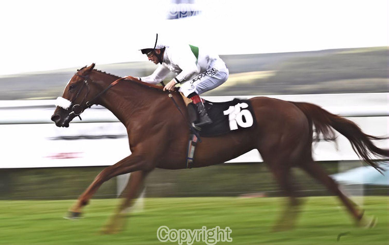 "Ian Yates ""Racehorse Stirring Ballad winning at Glorious Goodwood""  Equipment: Canon 5D MKII & Sigma 70-200 f2.8"