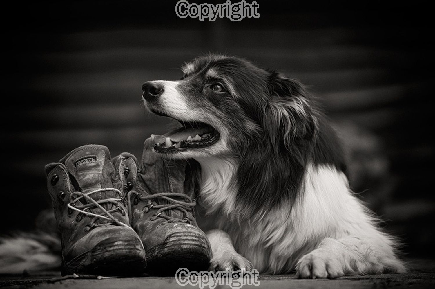 Brian Wigglesworth: Hurry up  Equipment: Canon 5D III & 70-200 f2.8L