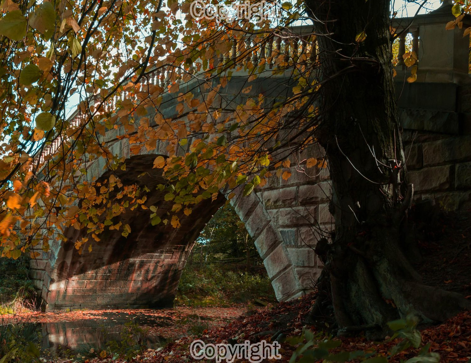 Ian Simpson: Sun light under the bridge  Equipment: Canon 650D & Sigma 17-50mm