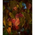 Pete Delancy: Autumn Gold  Equipment: Fujifilm X-E1 & 60mm