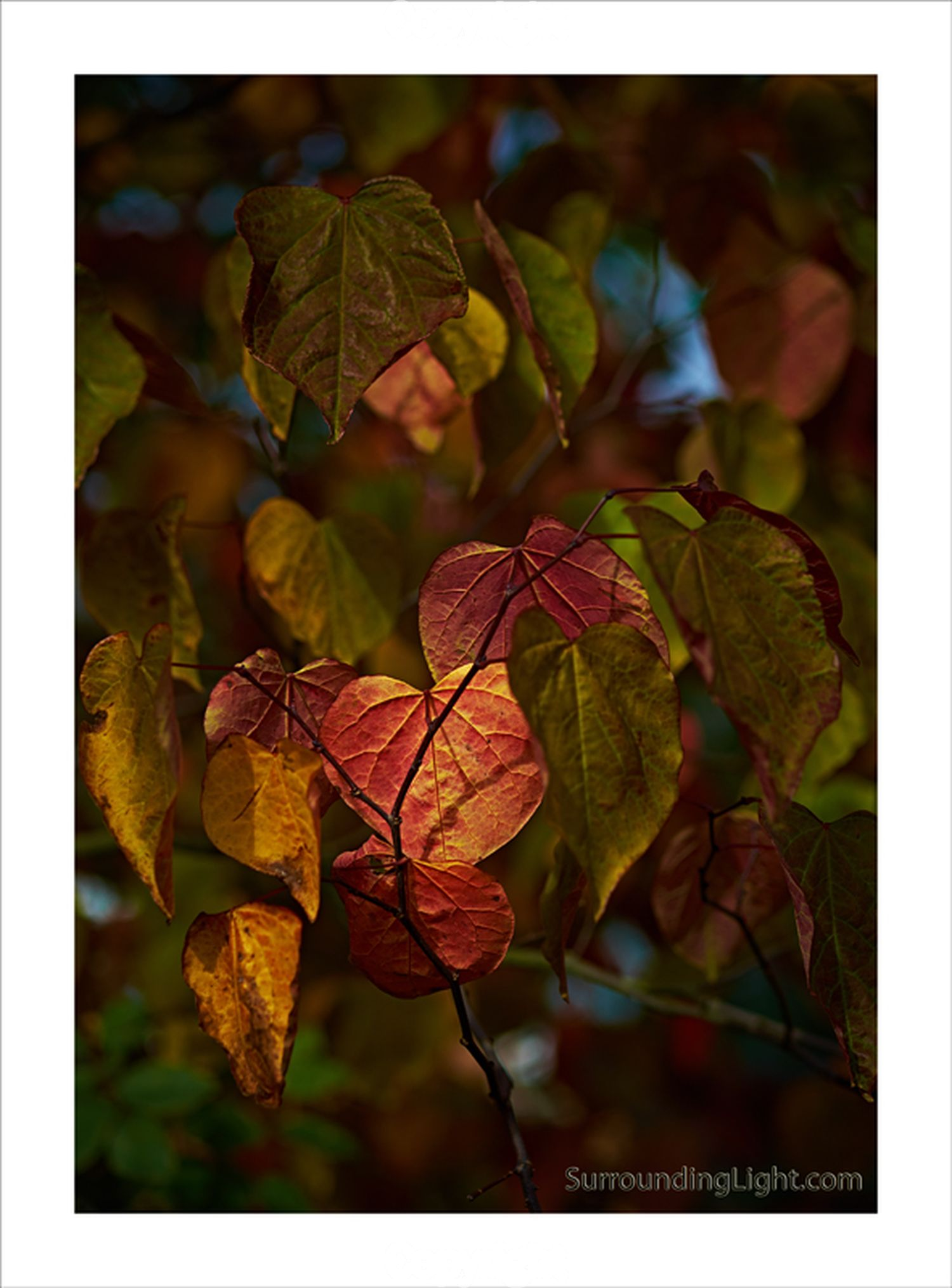 Pete Delancy: Autumn Gold  Equipment: Fujifilm X-E1 & 60mm