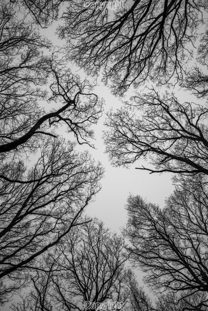 Trees struggling for light - Nikon D600 with 24-70mm <a class=